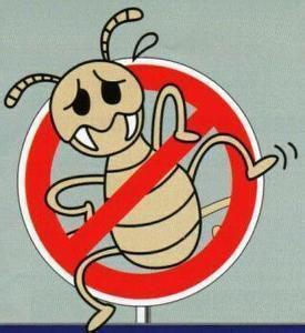 成都白蚁防治公司分享白蚁出巢应对策略