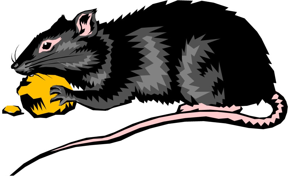 老鼠传播疾病的途径有哪些