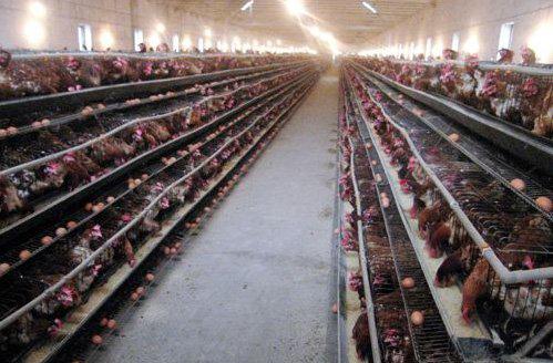 养殖场都是鼠害泛滥的场所,面临着严重的鼠害